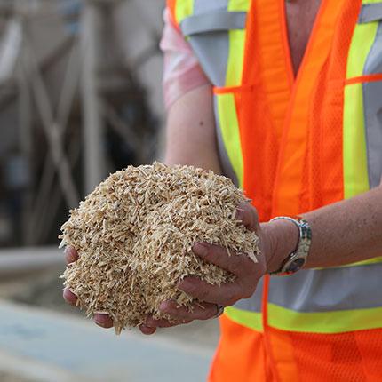 employee holding sawdust