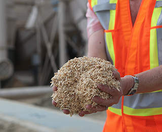 Conifex employee holding sawdust