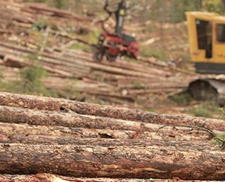 sustainablility harvesting lumber